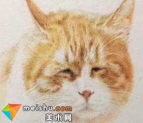「彩铅猫狗绘 我的云养日记」-黄日日-彩铅教程