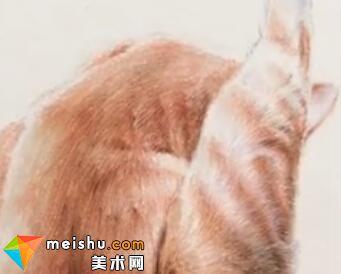 「彩铅猫狗绘 我的云养日记」-猫腿-彩铅教程