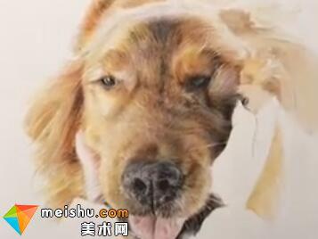 「彩铅猫狗绘 我的云养日记」-金毛狗(共2集)-彩铅教程