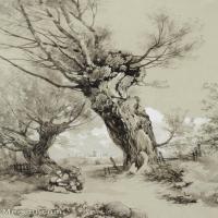 【印刷级】GH6085304古画树木植物立轴图片-58M-3856X5300_18039971
