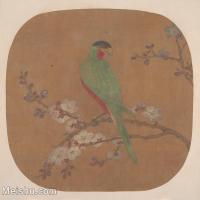 【印刷级】GH6080479古画花卉鲜花鸟古代-梅花枝头鹦鹉小品图片-31M-3450X3224